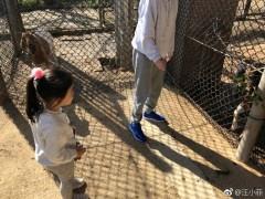 大S汪小菲带女儿动物园游玩 三人其乐融融惹人羡