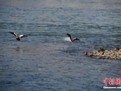中国完成澳门、珠海等地枯水期供水工作